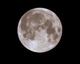 Super  Moon  .P5061329.jpg