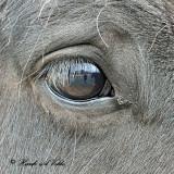 20110329 060 - SERIES  Horse2.jpg