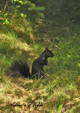20110321 031 Squirrel.jpg