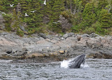 20110630 - 1 398 SERIES - Humpback Whale HP.jpg