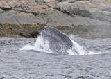 20110630 - 1 359 SERIES -  Humpback Whale.jpg