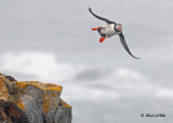 20110701 072 Atlantic Puffin.jpg