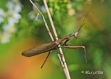 20110913 087, 086  Praying Mantis.jpg