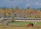 20111025 - 2 101 Horses.jpg