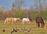 20111025 - 2 014 Horses.jpg