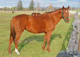 20111022 623 Horse.jpg