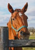 20111022 580 Horse.jpg