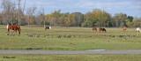 20111022 565  Horses.jpg