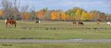 20111022 565, 466  SERIES -   Horses.jpg