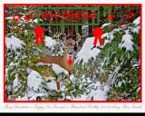 20111124 061 White-tailed Deer NX2c Xmas 7.jpg
