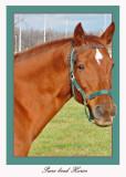 20111022 623 1c1 SERIES - Horse.jpg