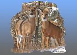 20111229 070 1R3 White-tailed Deer.jpg