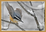 20120130 445 Red-breasted Nuthatch.jpg