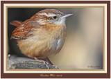 20120207 639 Carolina Wren.jpg