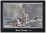 20120208 - 1 965 Boreal Chickadee.jpg