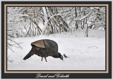 20120130 320 1r1a Wild Turkey &  Chickadee.jpg