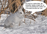 20120226 251 Snowshoe Hare.jpg
