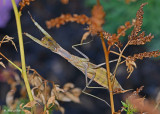 20120808 677 Praying Mantis.jpg