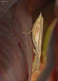 20120830 008 SERIES - Praying Mantis.jpg