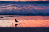 14895 Surf, Sunrise, Seagull
