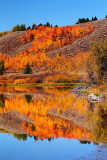 Oxbow Reflections - Fall Colours 2011