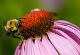 Shot Some Bees Today....