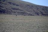 Wild Mustangs of Eastern Oregon