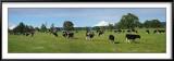 Vacas con Vista