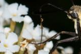 Moths, Butterflies, and Jumpers