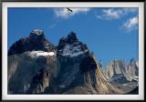Patagonia: Condor and Cuernos 2