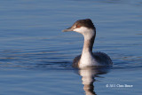 Loons, Grebes & Cormorants