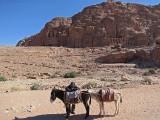 Petra Donkeys