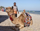 I had told you that I intended to buy a camel...