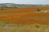 Paysage Sicilien