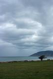 Grey Sky and the Lone Tree.jpg