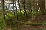 Bosque en la Cumbre del Volcan
