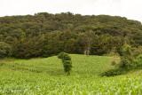 Cumbre del Volcan y Cultivos de Maiz
