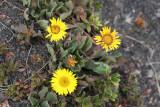 Pequeñas Flores Crecen en la Cumbre Tres Marias