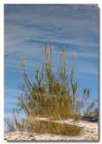 Sabino Creek Reflection I