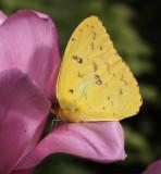 Papillons_2011 03 22_0255--1000.jpg