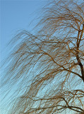 Lines in a Windswept Tree