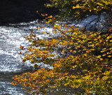 Leaves By A River