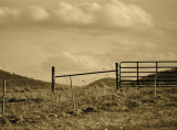 Old Fence Lines