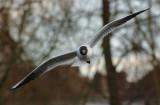 Gulls 10.jpg
