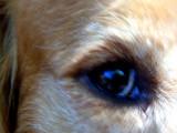 Eyeing I