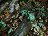 Fungus and Leaves after storms