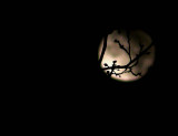 Moon peep