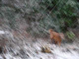 Snow and slow shutter effect