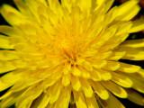 Weeds Blooms