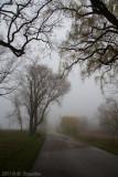 Arc in Fog